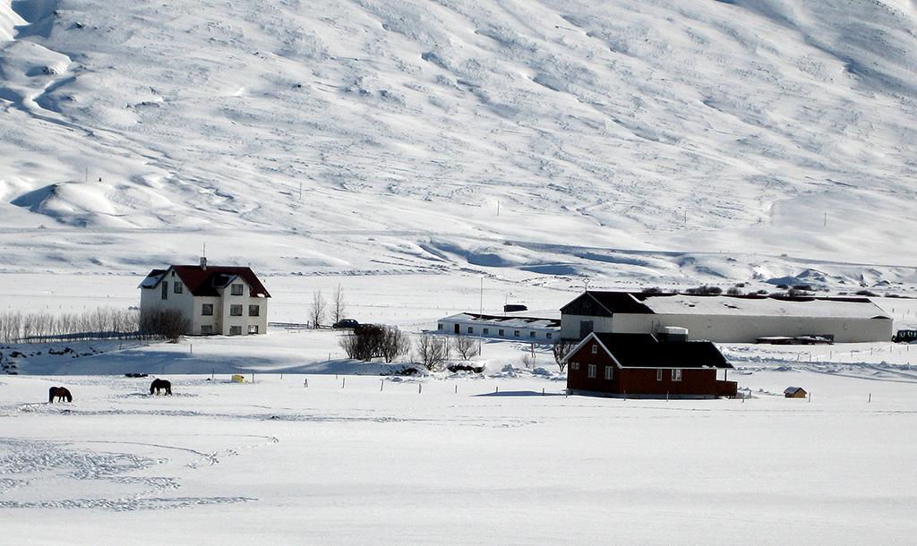 Bakki í Svarfaðardal ásamt útihúsum